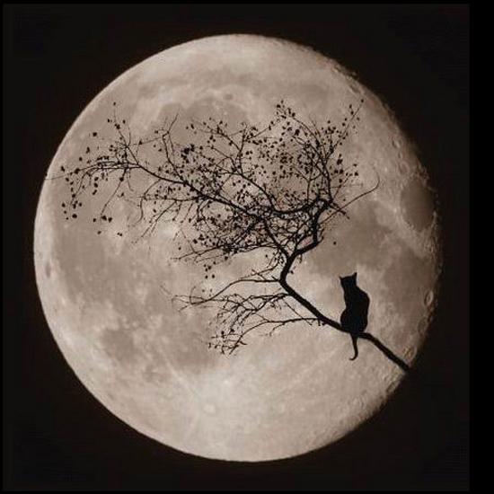 paysage-halloween-46