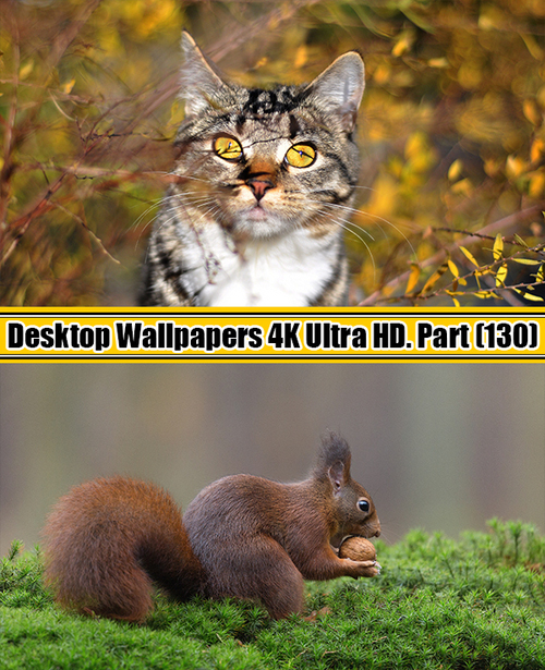 Deskop Wallpapers 4K Ultra HD. Part 130