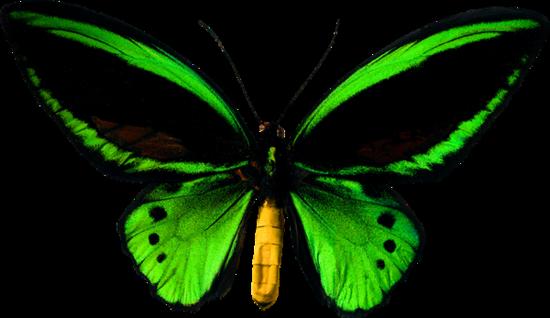 tubes_papillon_tiram_502