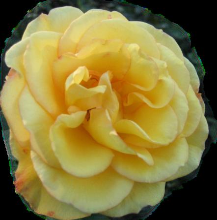 tubes_fleurs_tiram_781