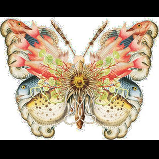 tubes_papillon_tiram_366
