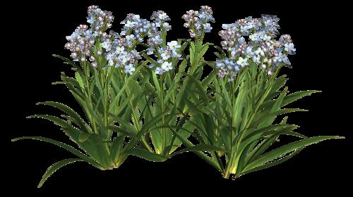 fleurs_paques_tiram_140
