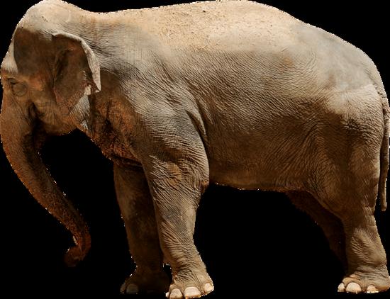 tubes_elephants_tiram_115