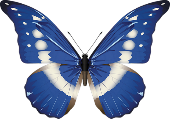 tubes_papillon_tiram_484