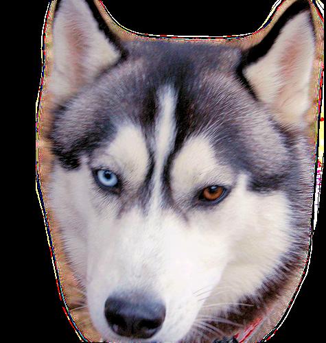 chien_tiram_386