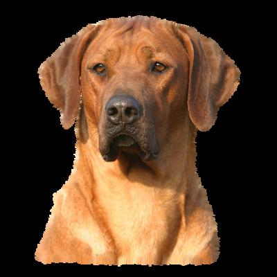 chien_tiram_7
