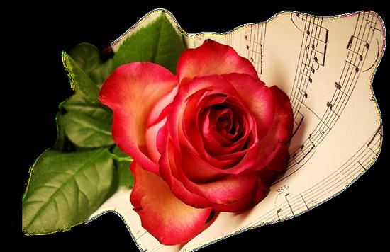 tubes_fleurs_tiram_268