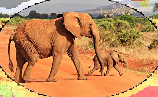tubes_elephants_tiram_616