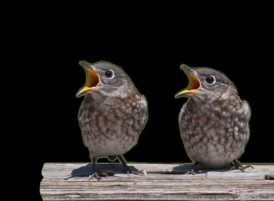 tubes_oiseaux_tiram_132