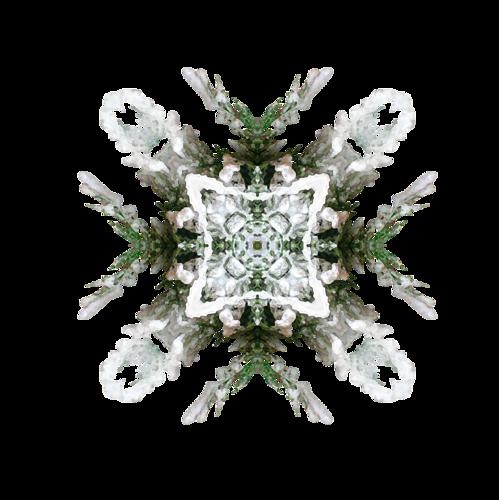 cluster-noel-224