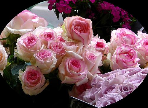 tubes_fleurs_tiram_631