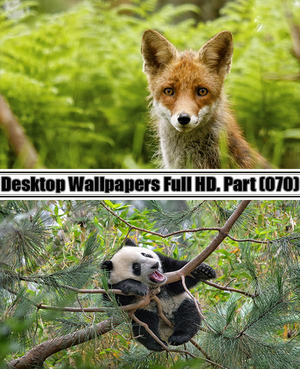 Desktop Wallpapers  HD. Part 70