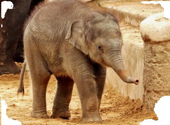 tubes_elephants_tiram_605
