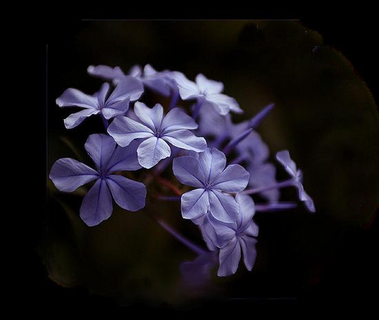 tubes_fleurs_tiram_5