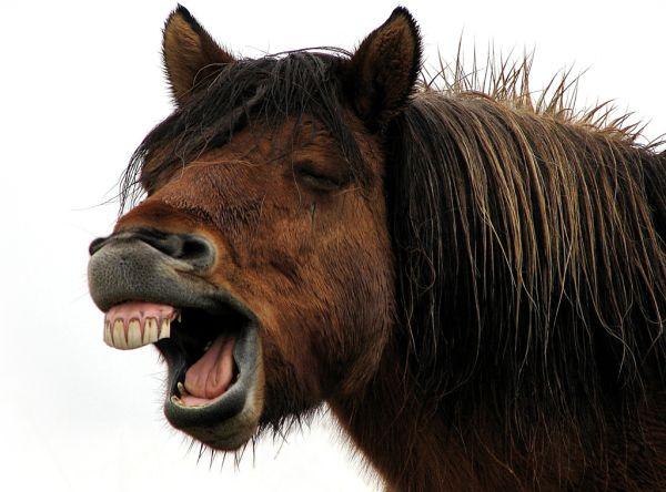 horse_laugh_dentist_teeth_big_funny_smile_funny_images_fun_bajiroo