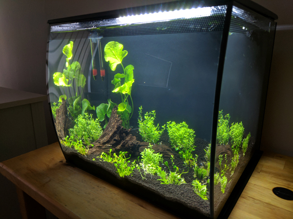 My Return 9gal Planted Tank Betta Fish And Betta Fish Care