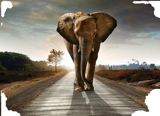tubes_elephants_tiram_482