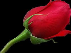 tubes_fleurs_saint_valentin_tiram_124