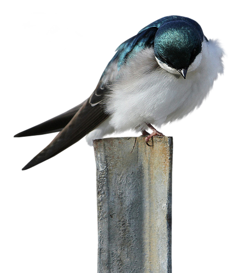 tubes_oiseaux_tiram_169