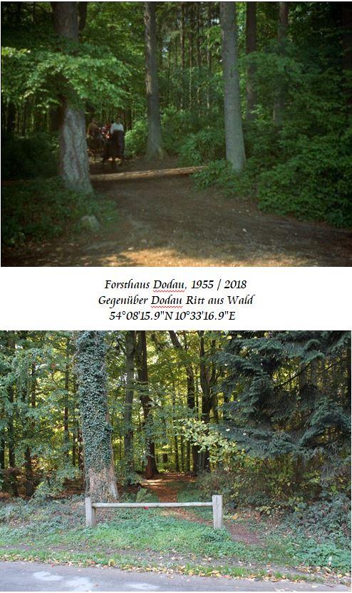 Dodau-Ritt-aus-Wald