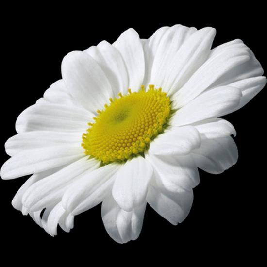 fleurs_paques_tiram_291