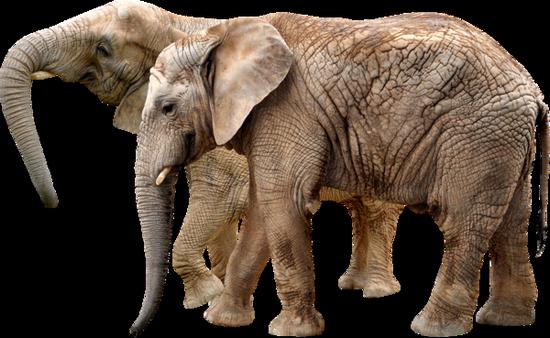 tubes_elephants_tiram_511