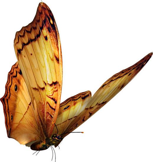 tubes_papillon_tiram_509
