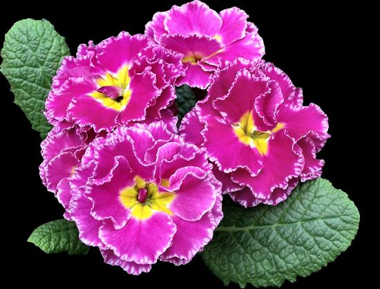tubes_fleurs_tiram_330