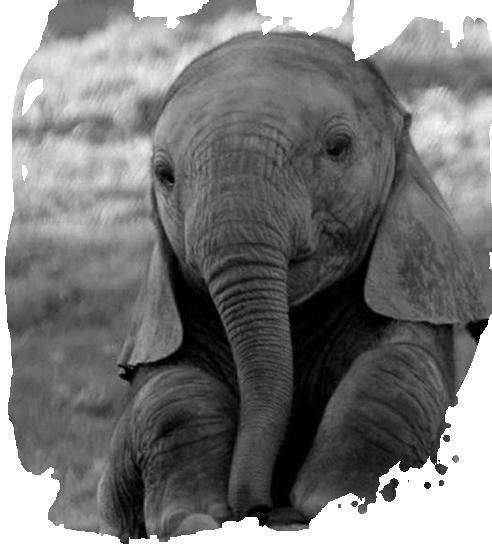 tubes_elephants_tiram_614