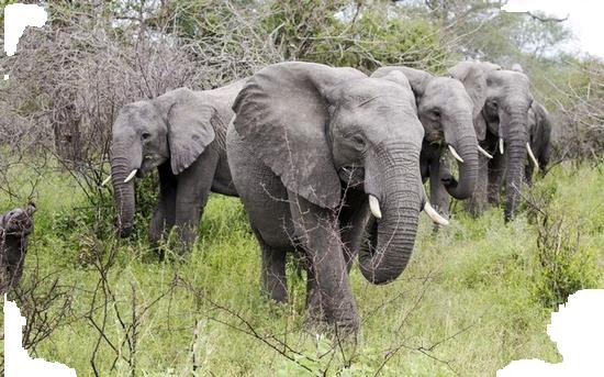 tubes_elephants_tiram_47