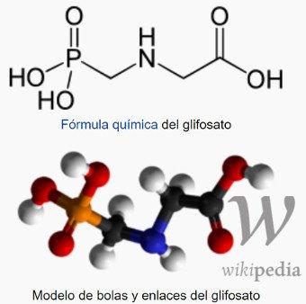 molécula glifosato (N-fosfonometilglicina)