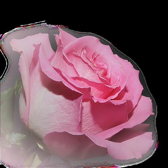 tubes_fleurs_tiram_351