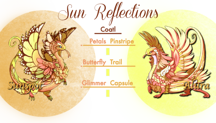 Sun_Reflections_Card.png