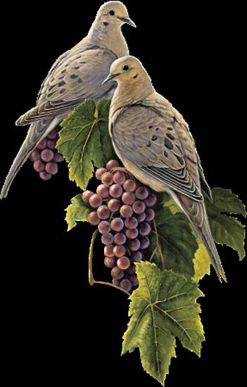 tubes_oiseaux_tiram_188
