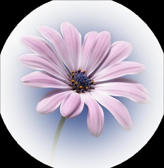 tubes_fleurs_tiram_443