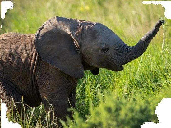 tubes_elephants_tiram_487