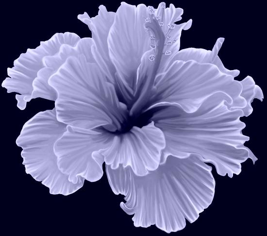 tubes_fleurs_tiram_517