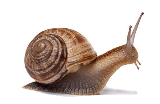 tubes_escargots_tiram_118