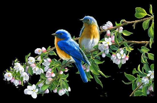 tubes_oiseaux_tiram_155