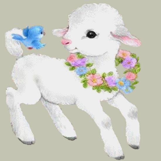 mouton_tiram_84