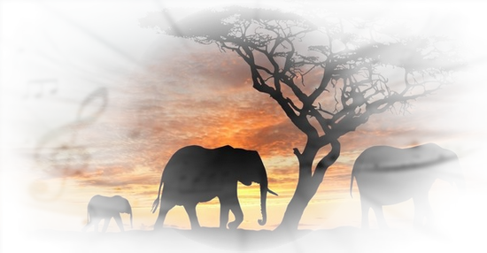 tubes_elephants_tiram_623