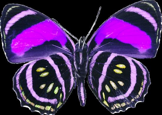 tubes_papillon_tiram_640