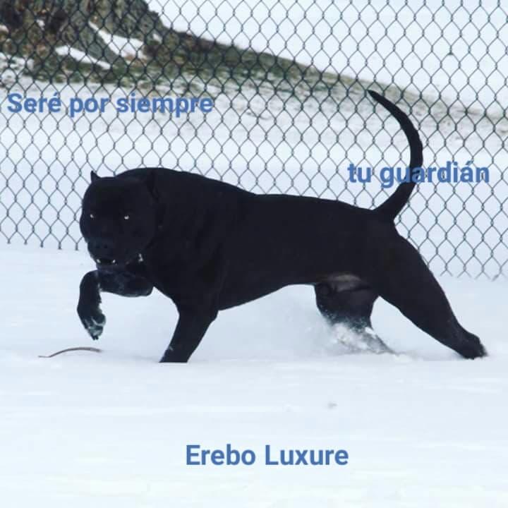 erebo1.jpg