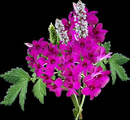 fleurs_paques_tiram_183