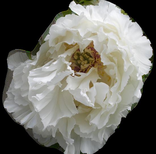 tubes_fleurs_tiram_201