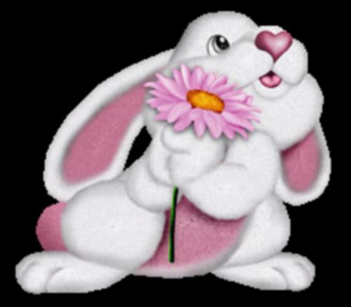 lapins_paques_tiram_149