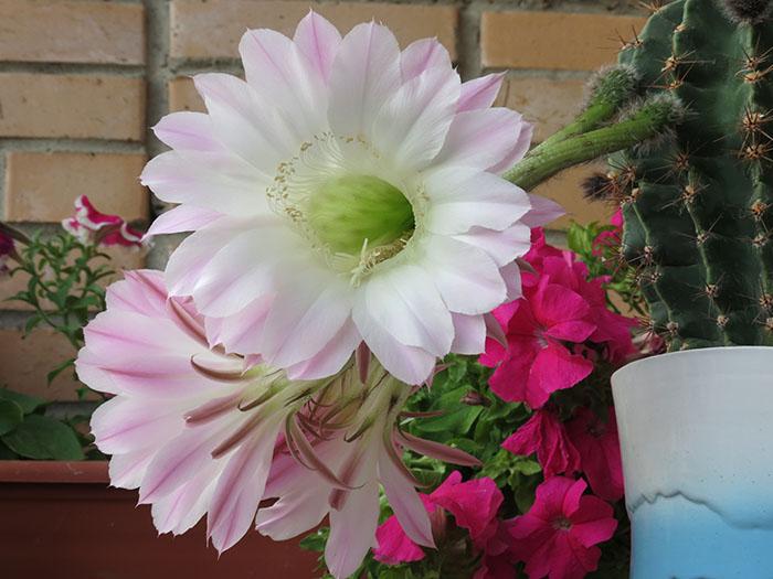 Цветущий Яшечкин