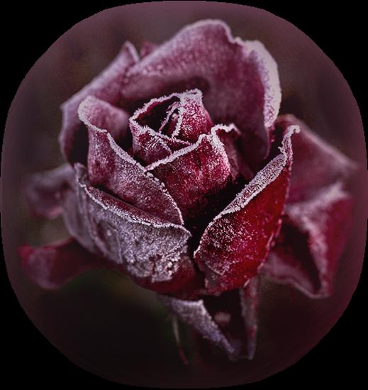 tubes_fleurs_tiram_307