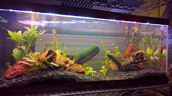 New Planted Tank: fish keep dying - The Planted Tank Forum