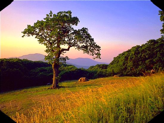 paysage_tiram_926